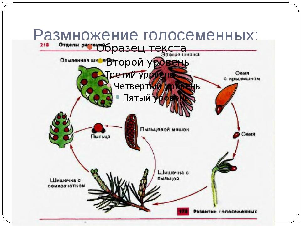 Онлайн книжка баландина дегтярёва лебеденко 6 класс