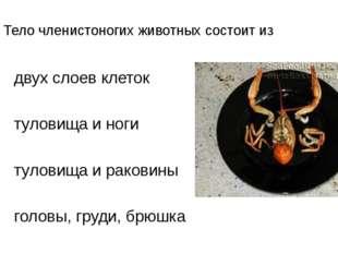 А1. Тело членистоногих животных состоит из 1)двух слоев клеток 2)туловища и