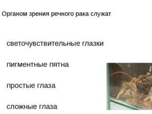 АЗ. Органом зрения речного рака служат 1)светочувствительные глазки 2)пигме