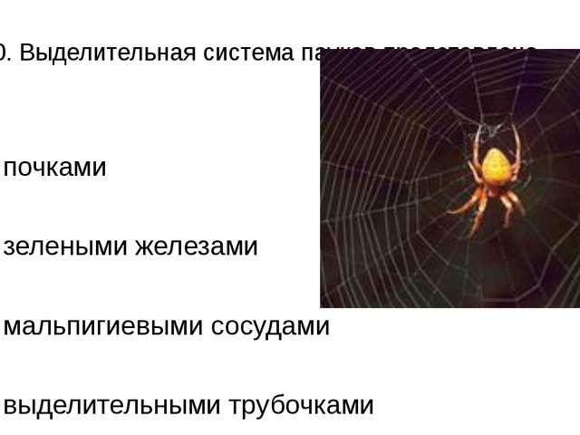 А10. Выделительная система пауков представлена 1)почками 2)зелеными железам...
