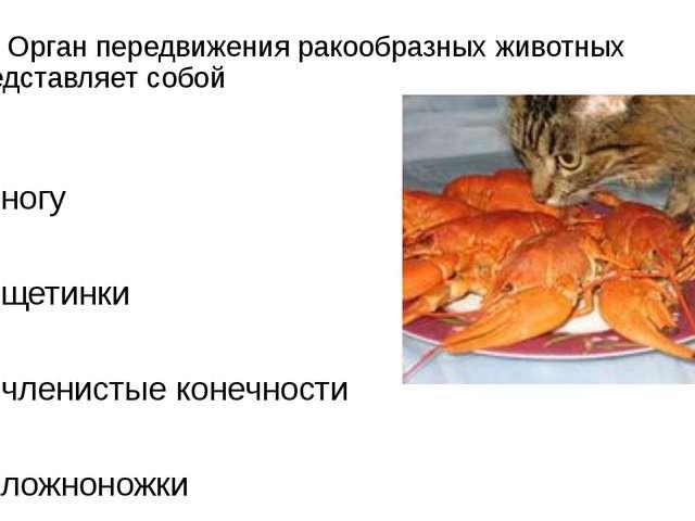 А2. Орган передвижения ракообразных животных представляет собой 1)ногу 2)ще...