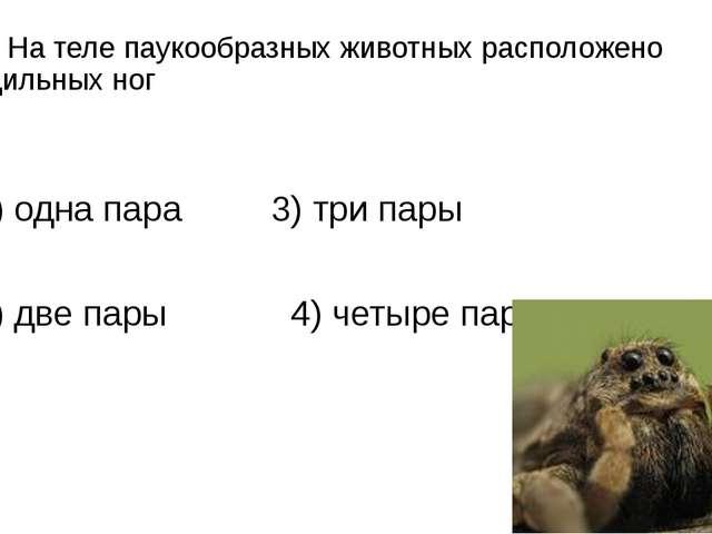 А5. На теле паукообразных животных расположено ходильных ног 1) одна пара 3)...