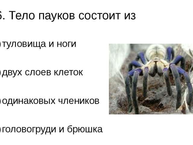 А6. Тело пауков состоит из 1)туловища и ноги 2)двух слоев клеток 3)одинако...
