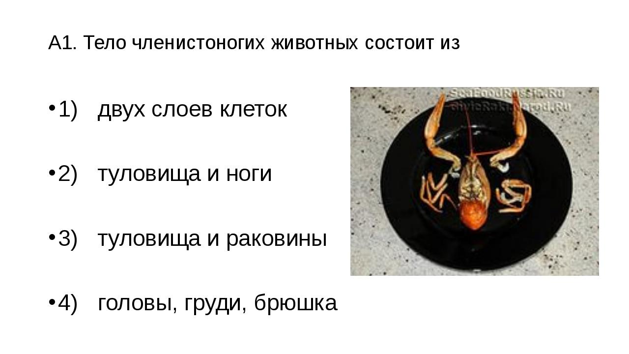 А1. Тело членистоногих животных состоит из 1)двух слоев клеток 2)туловища и...