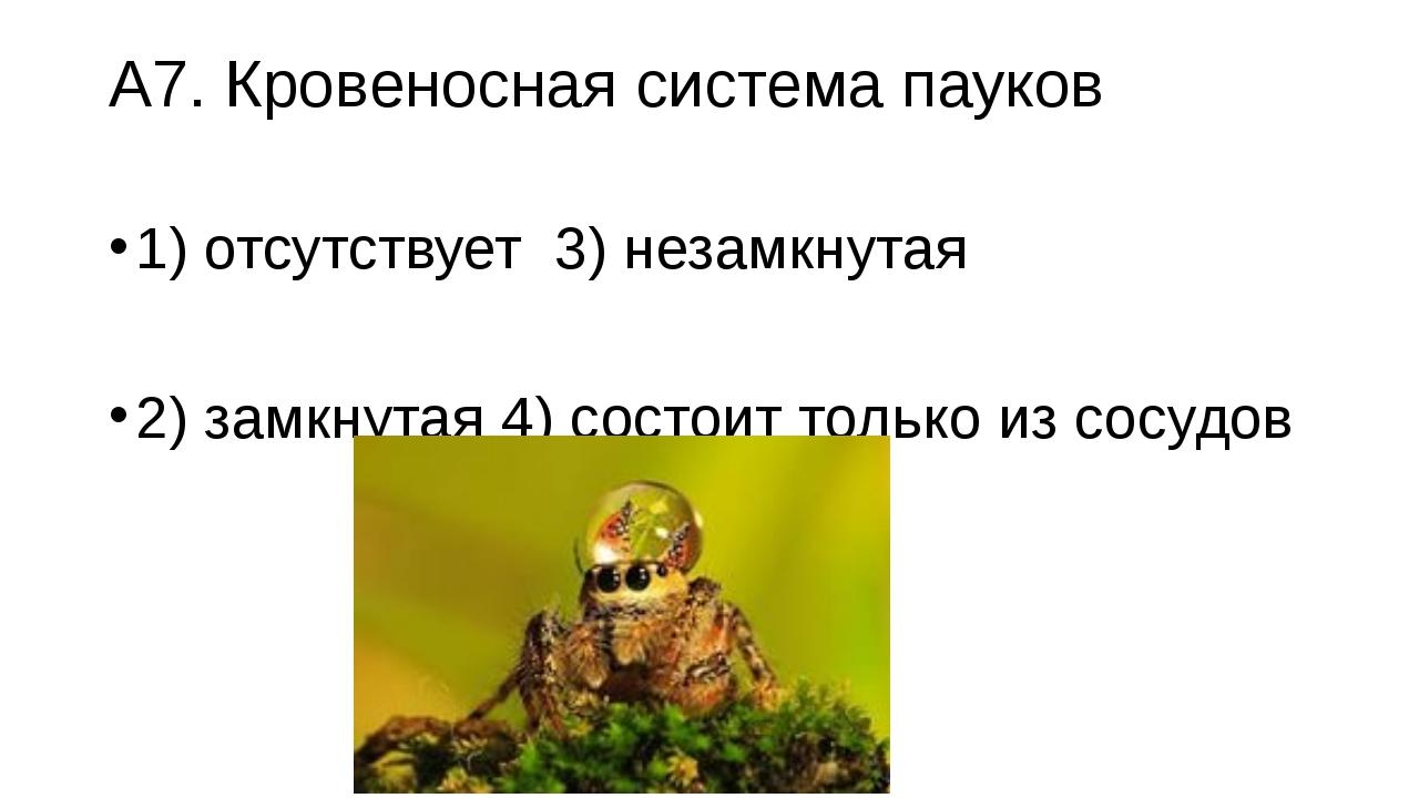 А7. Кровеносная система пауков 1) отсутствует3) незамкнутая 2) замкнутая4)...