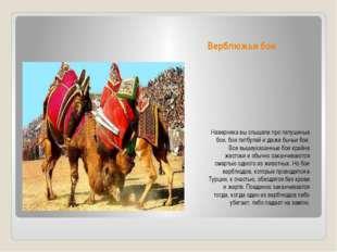 Верблюжьи бои Наверняка вы слышали про петушиные бои, бои питбулей и даже быч