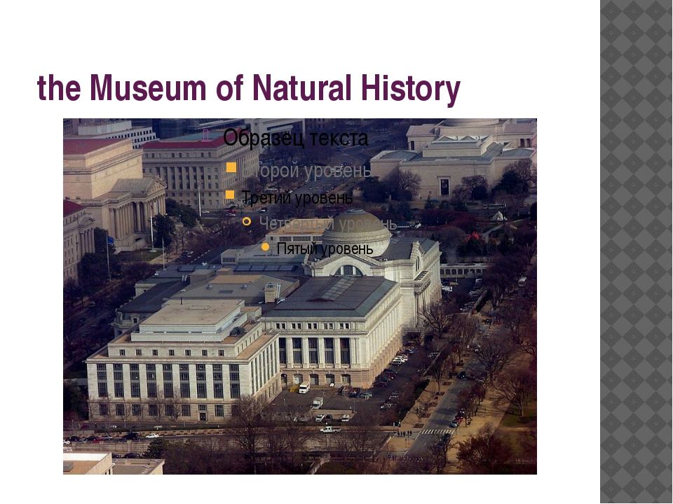 the Museum of Natural History