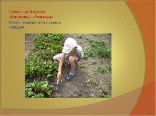 Почва каменистая и очень твёрдая Социальный проект «Витамины – больным»