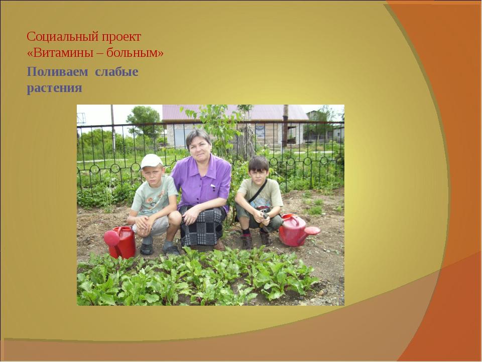 Поливаем слабые растения Социальный проект «Витамины – больным»