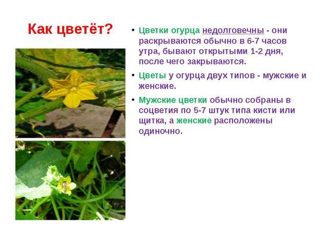 Женские мужские цветки огурца
