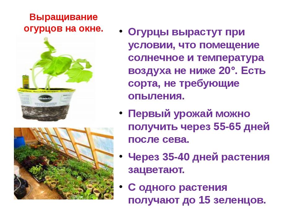 Купить арбалет в китае arbalet75 ru