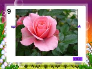 ОТВЕТ 9 Лепесток какого цветка служил одеялом Дюймовочке из одноименной сказк