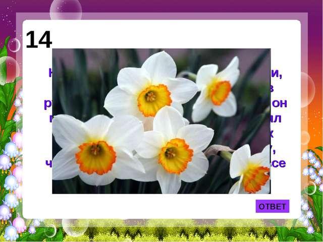 ОТВЕТ 14 Назван этот цветок по имени юноши, который увидел свое отражение в р...