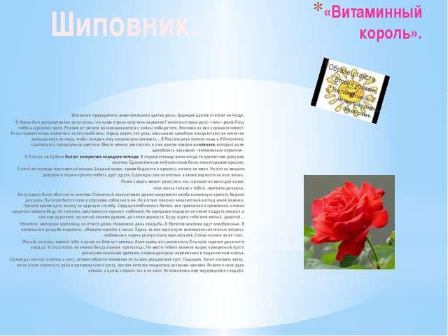 «Витаминный король». Шиповник-прародитель замечательного цветка розы. Царицей...