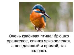 Очень красивая птица: брюшко оранжевое, спинка ярко-зеленая, а нос длинный и