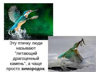 """Эту птичку люди называют """"летающий драгоценный камень"""", а чаще простозимород"""