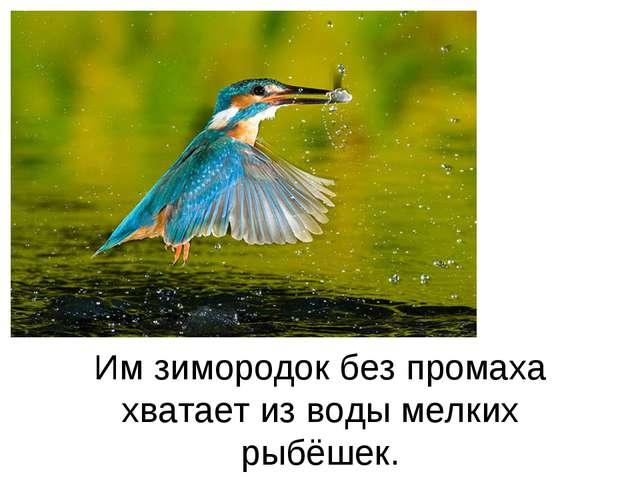 Им зимородок без промаха хватает из воды мелких рыбёшек.