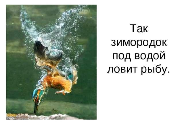 Так зимородок под водой ловит рыбу.