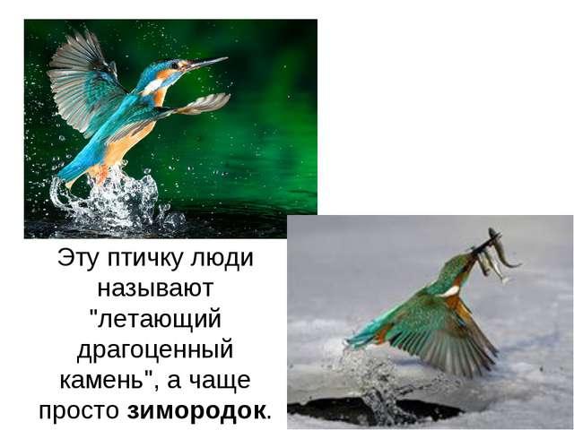"""Эту птичку люди называют """"летающий драгоценный камень"""", а чаще простозимород..."""