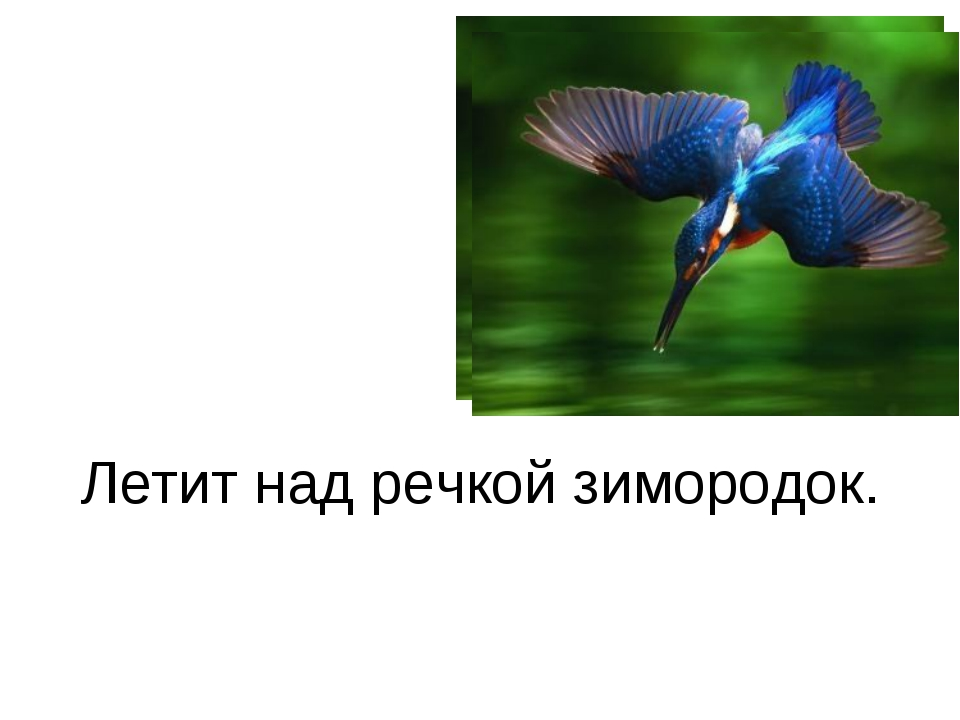 Летит над речкой зимородок.