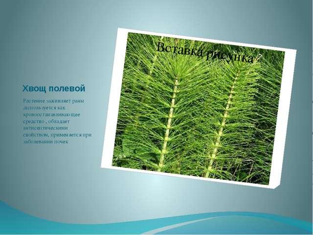Хвощ полевой Растение заживляет раны ,используется как кровоостанавливающее с...