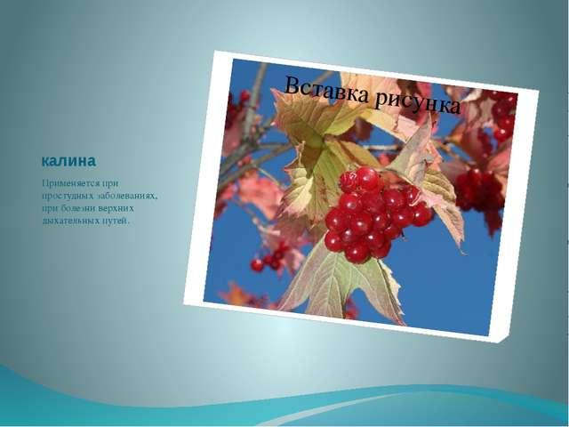калина Применяется при простудных заболеваниях, при болезни верхних дыхательн...