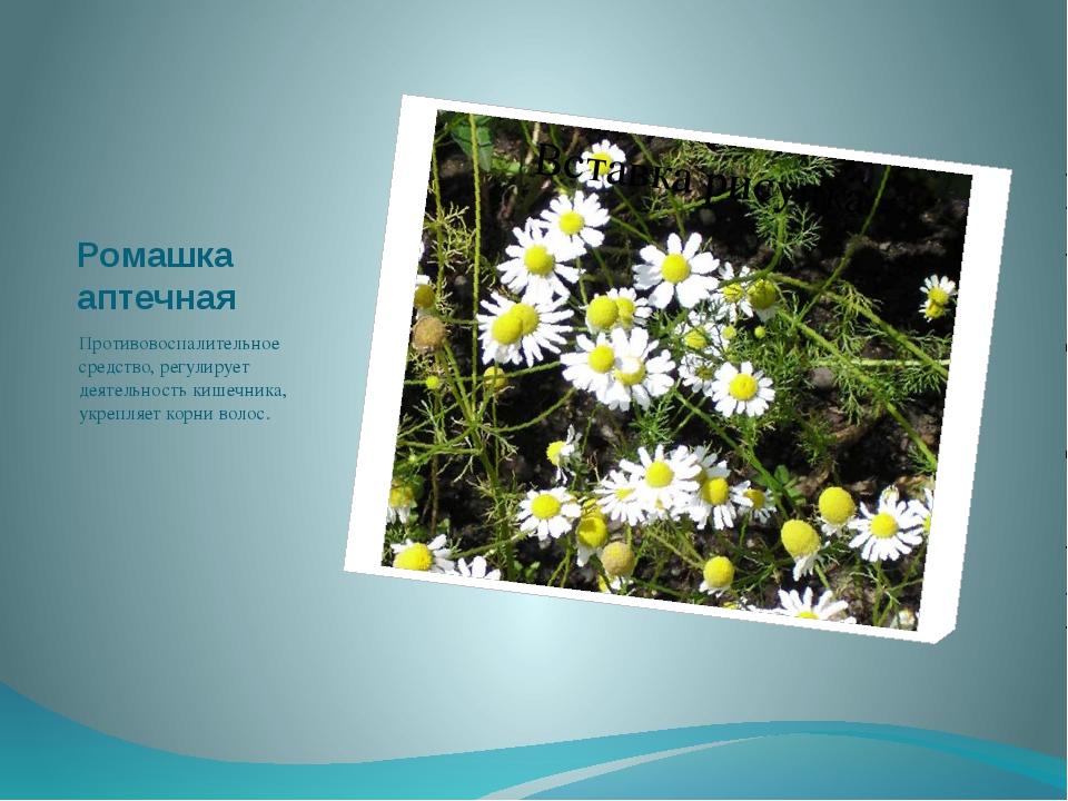 Ромашка аптечная Противовоспалительное средство, регулирует деятельность кише...