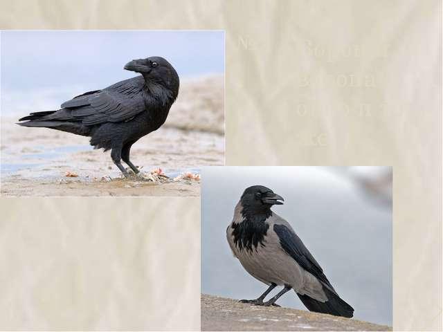 №5 Ворон и ворона – одно и то же. 