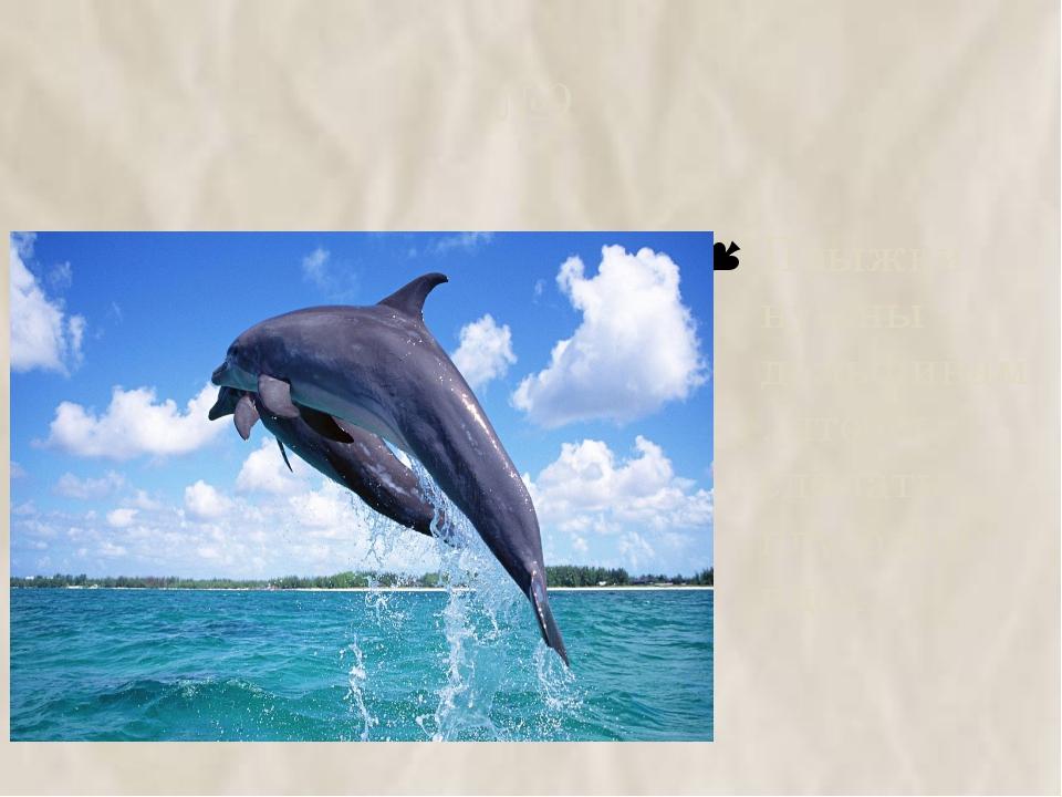 №9 Прыжки нужны дельфинам, чтобы сделать глубокий вдох.
