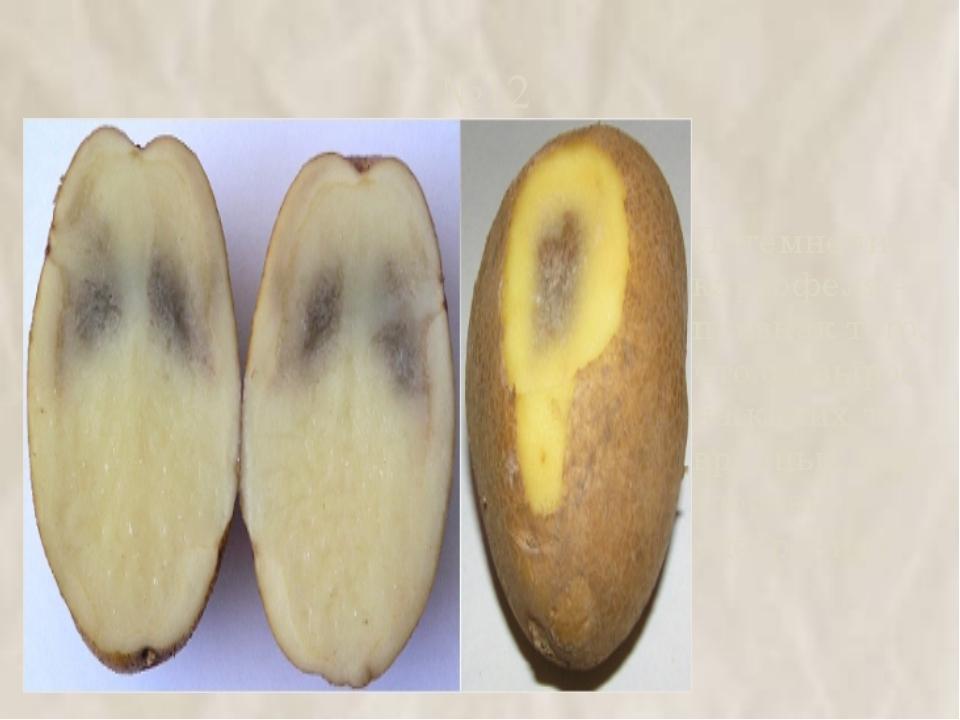 №12 Потемнение картофеля – признак того, что он вырос на каких‑то вредных для...