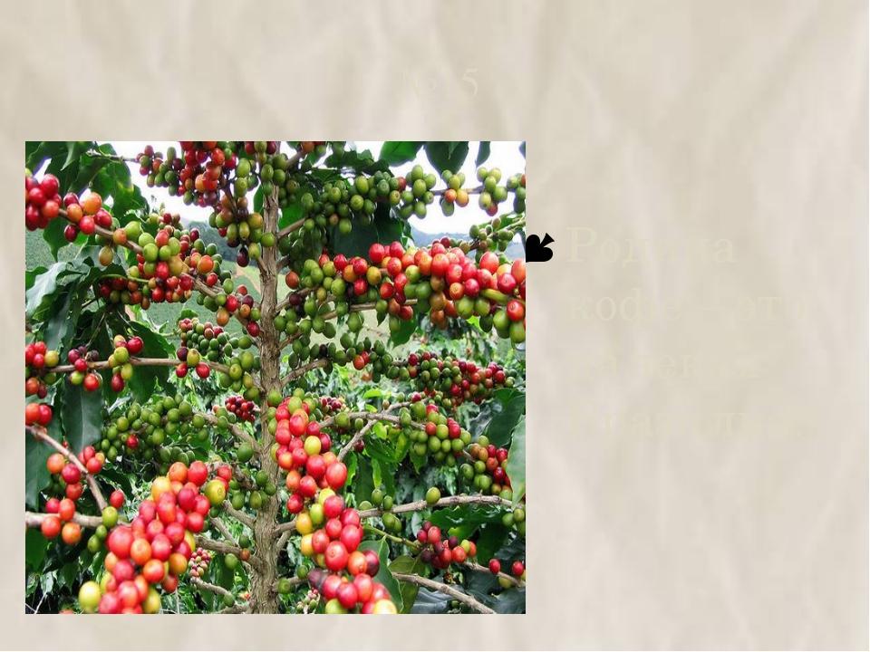 №15 Родина кофе – это далекая Бразилия.
