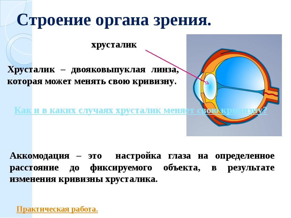 Строение органа зрения. хрусталик Хрусталик – двояковыпуклая линза, которая м...