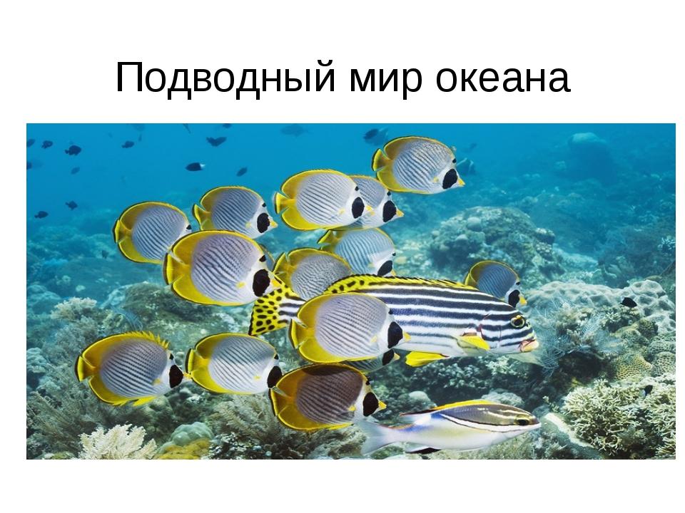 Подводный мир океана