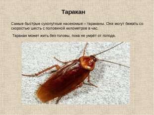 Самые быстрые сухопутные насекомые – тараканы. Они могут бежать со скоростью