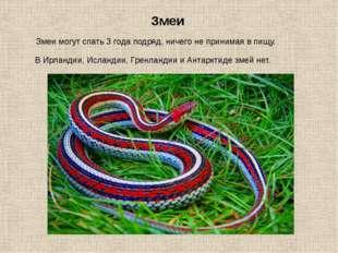 Змеи могут спать 3 года подряд, ничего не принимая в пищу. Змеи В Ирландии, И