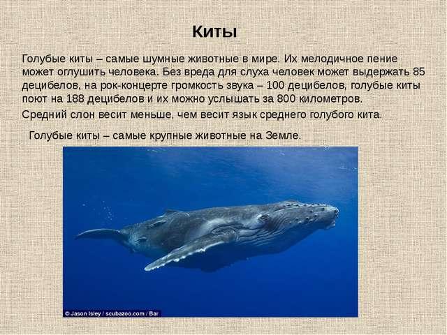 Киты Голубые киты – самые шумные животные в мире. Их мелодичное пение может о...