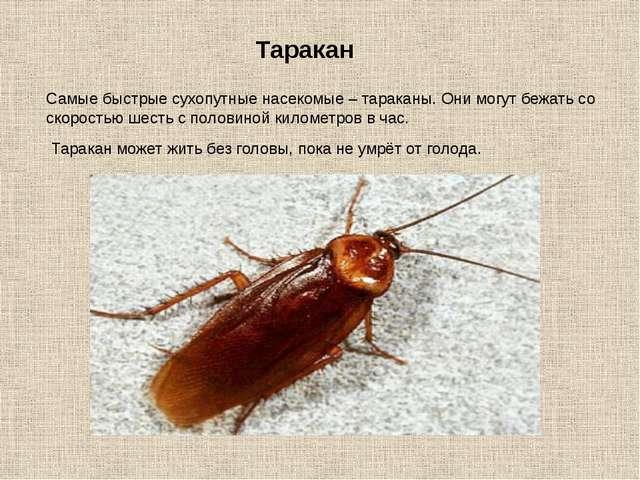 Самые быстрые сухопутные насекомые – тараканы. Они могут бежать со скоростью...