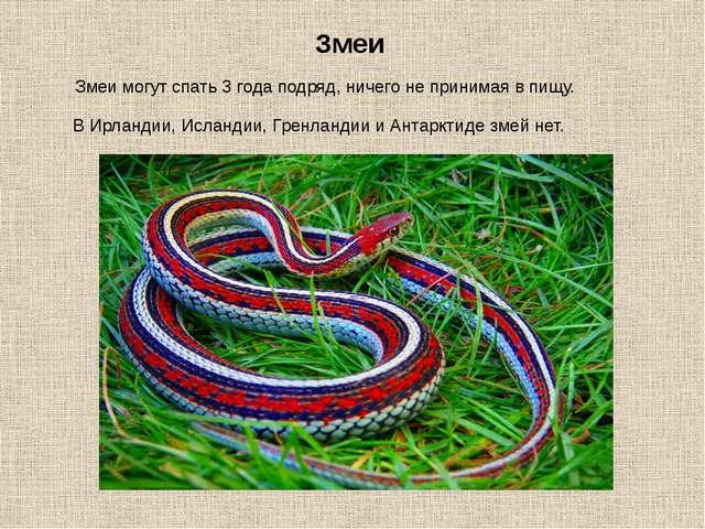 Змеи могут спать 3 года подряд, ничего не принимая в пищу. Змеи В Ирландии, И...