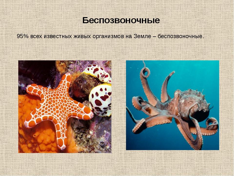Беспозвоночные 95% всех известных живых организмов на Земле – беспозвоночные.