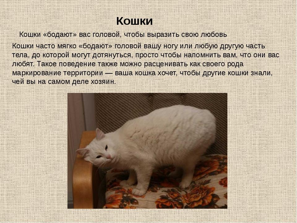 Кошки Кошки «бодают» вас головой, чтобы выразить свою любовь Кошки часто мягк...