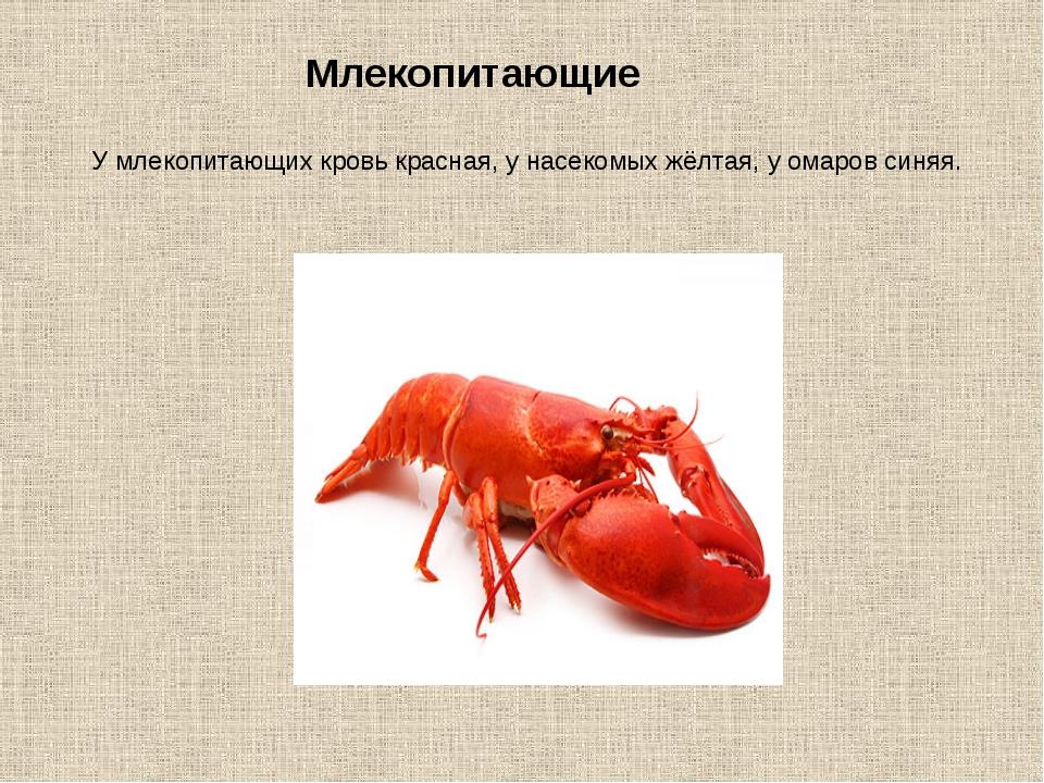 У млекопитающих кровь красная, у насекомых жёлтая, у омаров синяя. Млекопитаю...