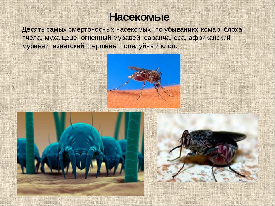 Десять самых смертоносных насекомых, по убыванию: комар, блоха, пчела, муха ц...