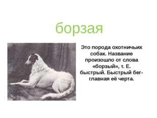 Это порода охотничьих собак. Название произошло от слова «борзый», т. Е. быст