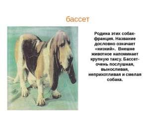 Родина этих собак- франция. Название дословно означает «низкий». Внешне живот
