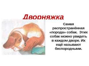 Самая распространённая «порода» собак. Этих собак можно увидеть в каждом двор