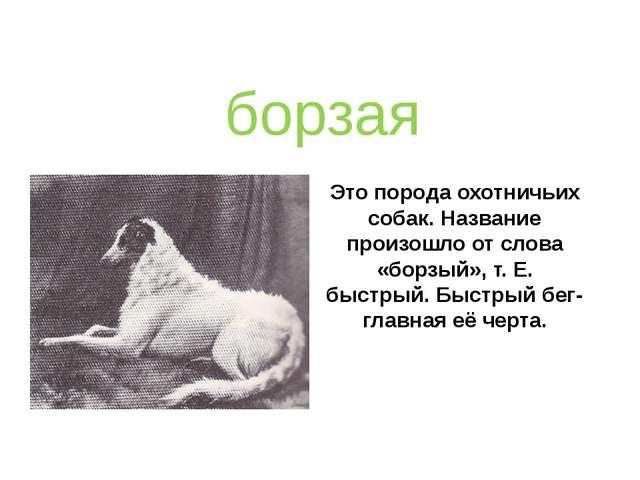 Это порода охотничьих собак. Название произошло от слова «борзый», т. Е. быст...