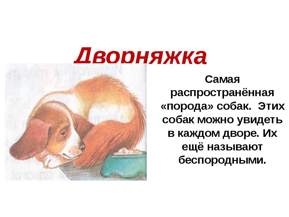 Самая распространённая «порода» собак. Этих собак можно увидеть в каждом двор...