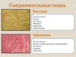 Костная Хрящевая Расположение: скелет Функции: Опорная Защитная кроветворная