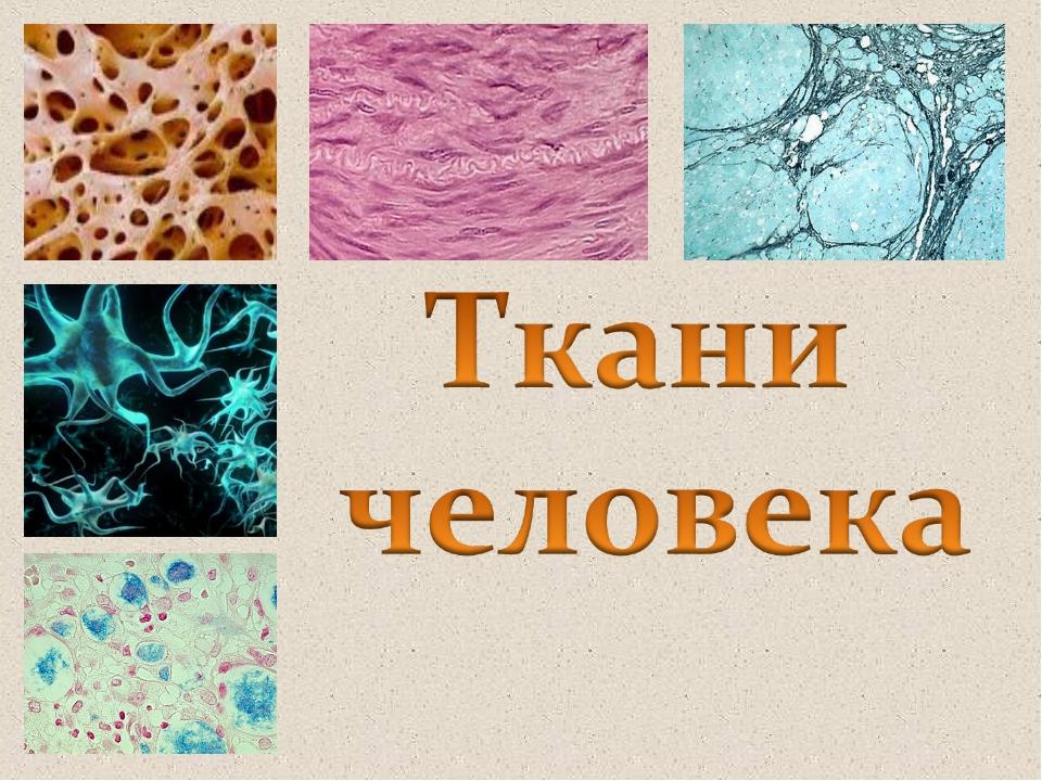 картинки на тему ткани человека пути