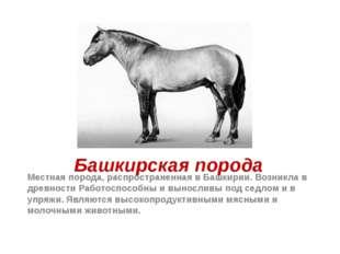 Башкирская порода Местная порода, распространенная в Башкирии. Возникла в дре